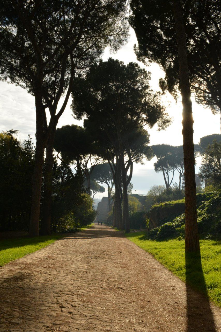 Сосны пиния, Рим
